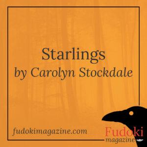 Starlings by Carolyn Stockdale